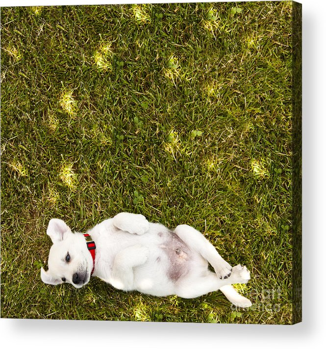 Puppy Acrylic Print featuring the photograph Puppy in the Grass by Diane Diederich