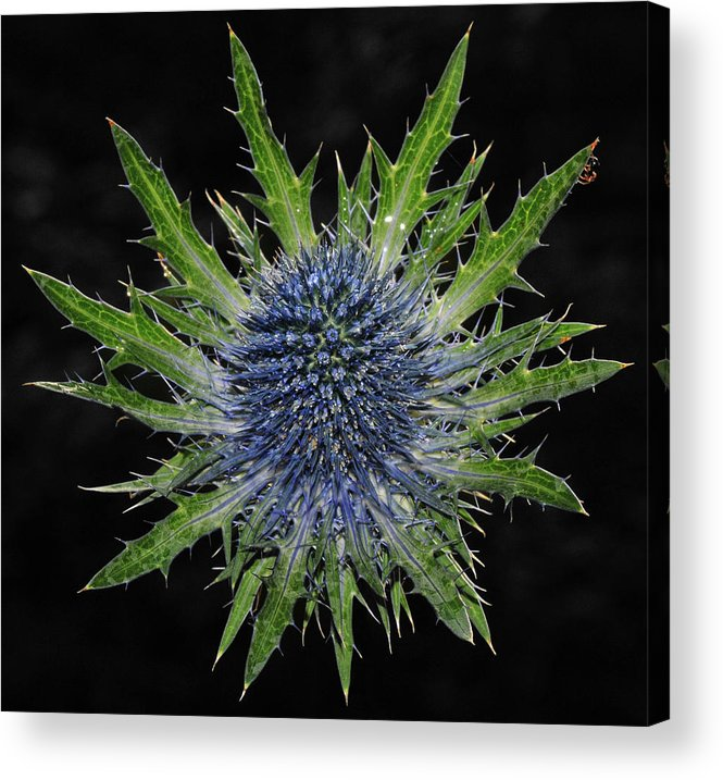 Insect Acrylic Print featuring the photograph Spider by Love Photography