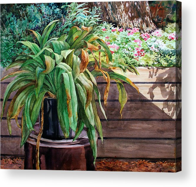 Watercolor Acrylic Print featuring the painting Sunburnt Kaffir Lily by Peter Sit