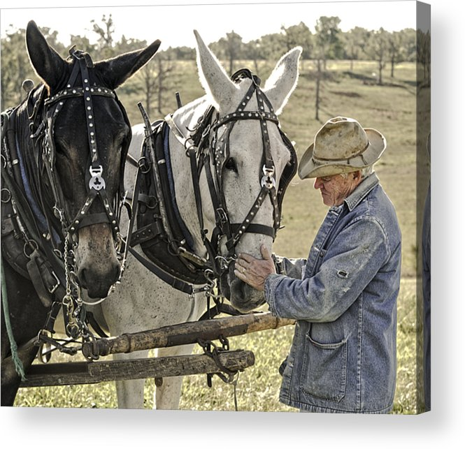 Mule Acrylic Print featuring the photograph Bound by Trust by Ron McGinnis