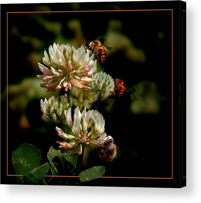 Bees Acrylic Print featuring the photograph In The Work by Richard Gordon