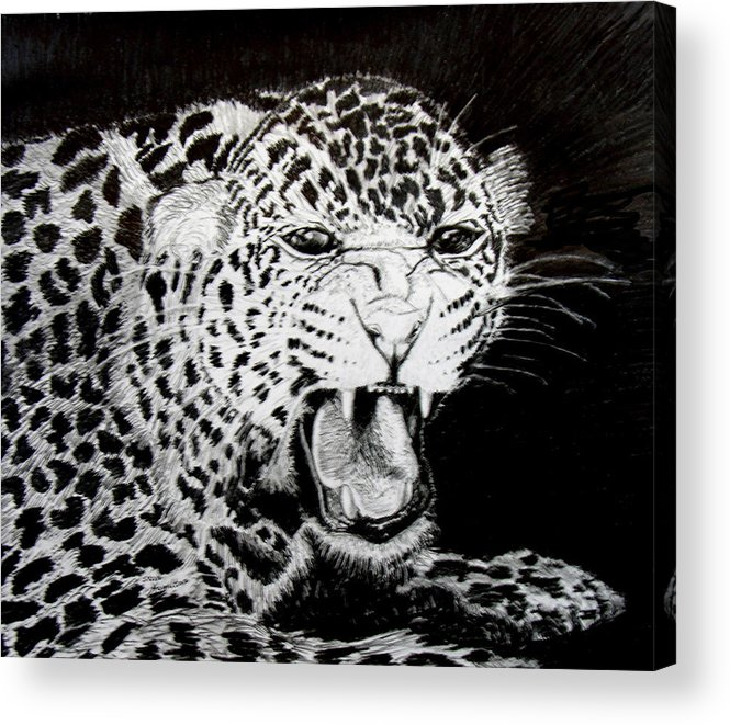 Original Drawing Acrylic Print featuring the drawing Jaquar II by Stan Hamilton