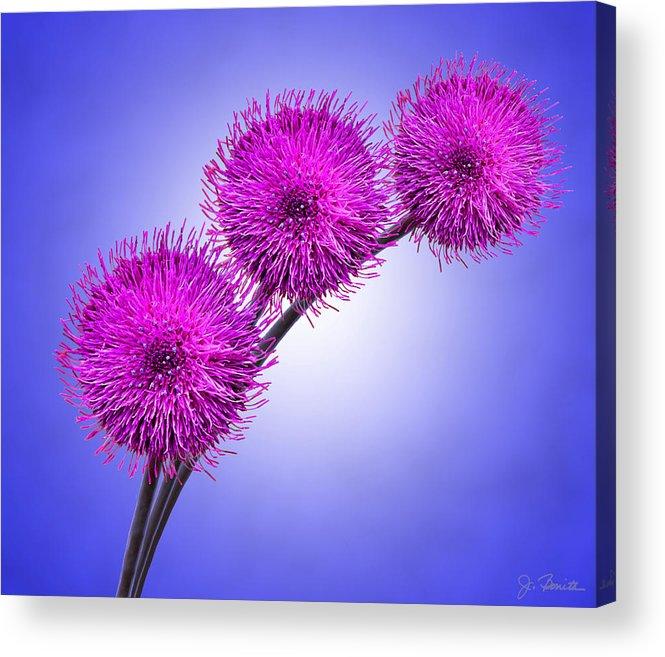 Floral Acrylic Print featuring the photograph Melancholy No. 2 by Joe Bonita