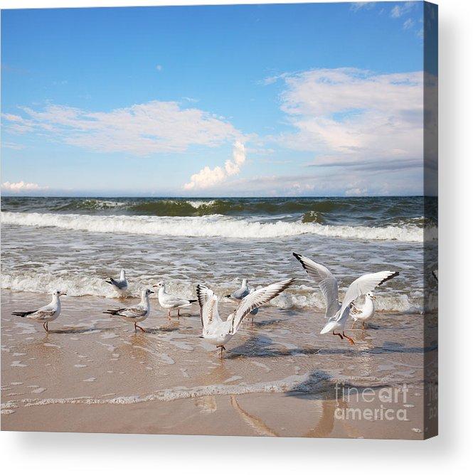 Sea-gull Acrylic Print featuring the photograph Group Of Seagulls Ower Sea by Majeczka