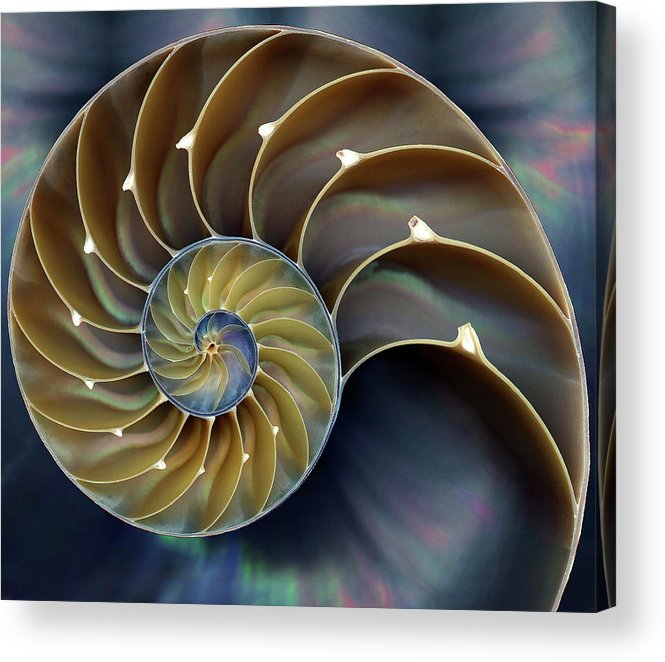 Cephalopod Acrylic Print featuring the photograph Nautilus by 0049-1215-16-2610334597