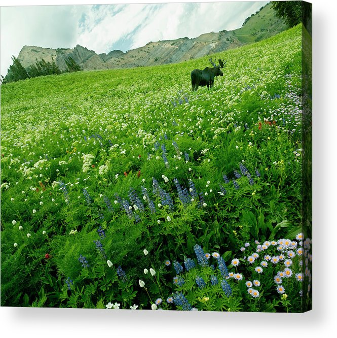 Non-urban Scene Acrylic Print featuring the photograph Usa, Utah, Wasatch National Forest, Mt by John Wang