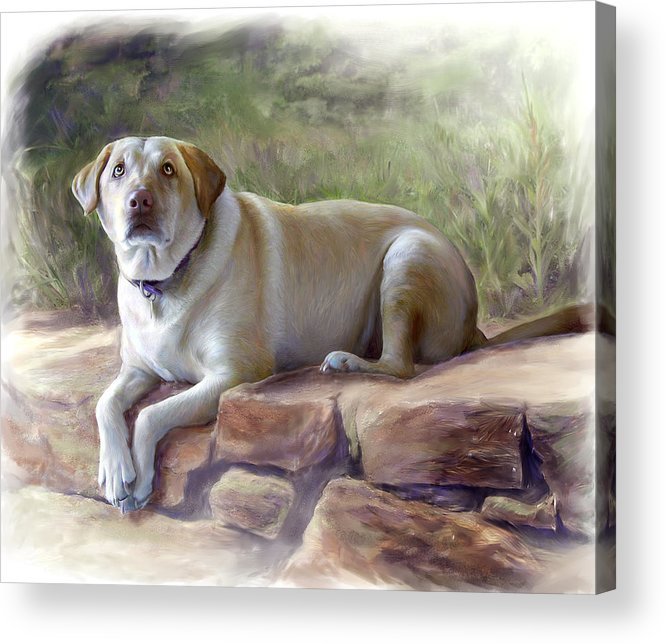 Dog Acrylic Print featuring the painting Restrained Energy- Yellow Labrador Retriever Portrait by Connie Moses