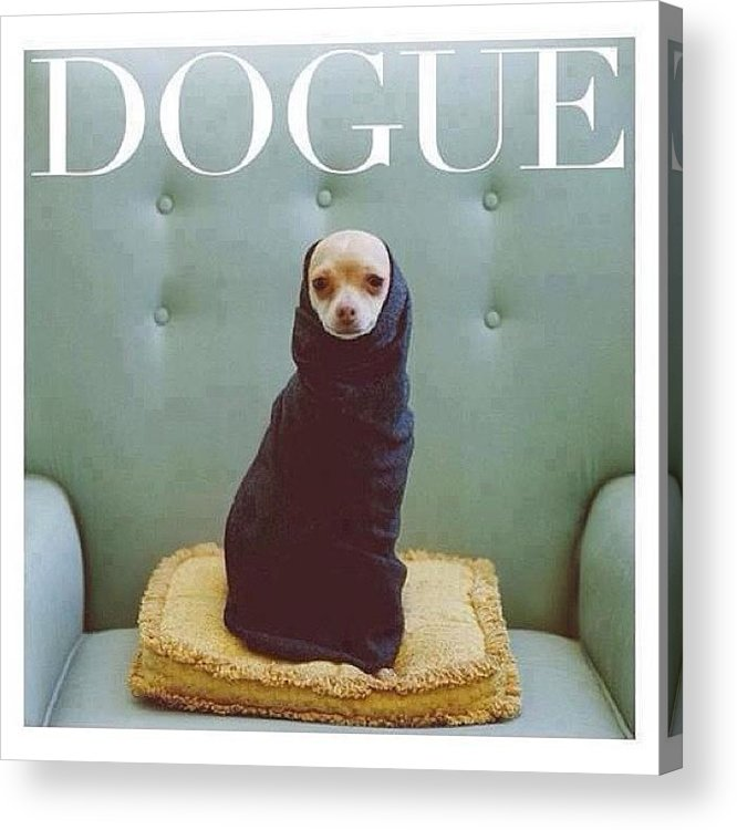 Dogue Acrylic Print featuring the photograph 😂😂😂😂 #dogue #vogue by Matheo Montes