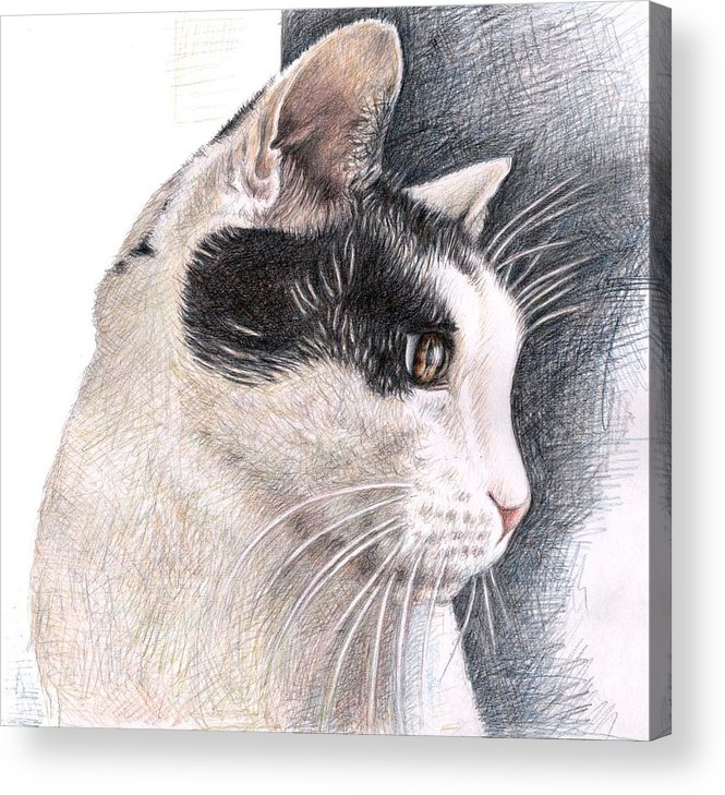 Cat Acrylic Print featuring the drawing Cats View by Nicole Zeug