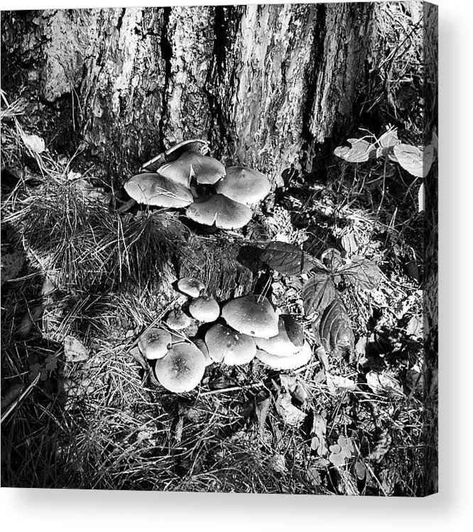 Mushroom Acrylic Print featuring the photograph Mushrooms by Illusorium Illustration