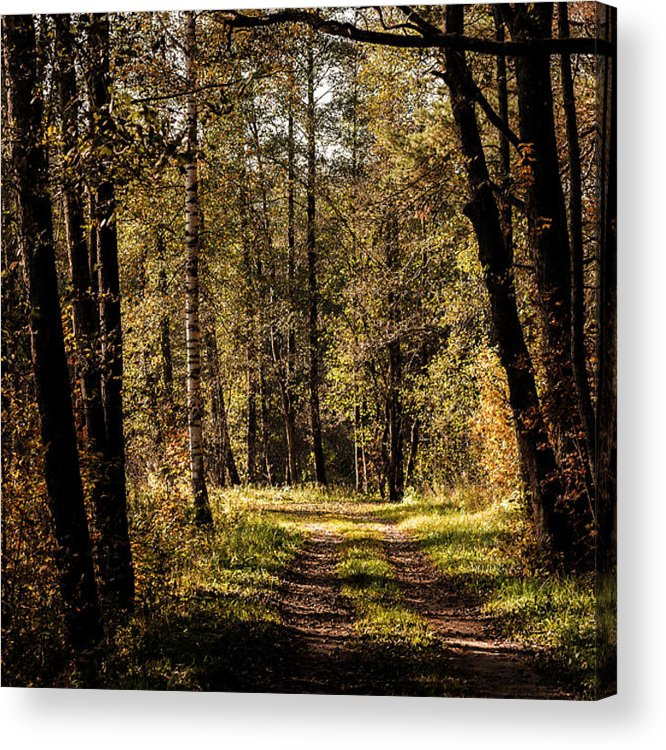 Forest Acrylic Print featuring the photograph Forest by Illusorium Illustration