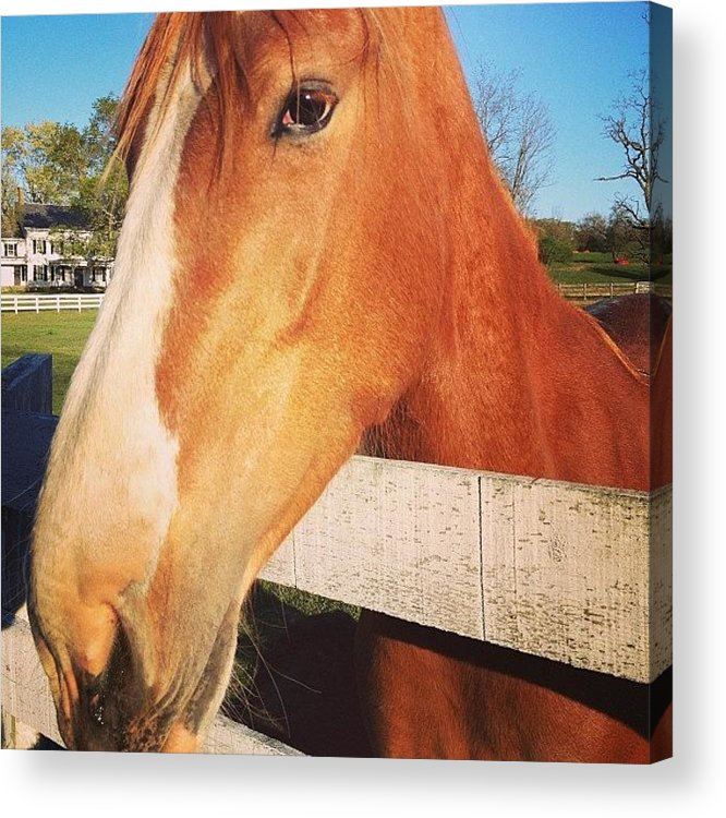 Horse Acrylic Print featuring the photograph #horse #pretty #nature #wow #amazing by Amber Campanaro