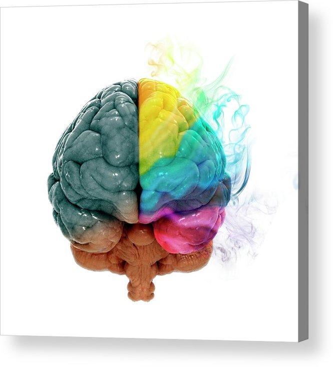 White Background Acrylic Print featuring the digital art Human Brain, Artwork by Andrzej Wojcicki