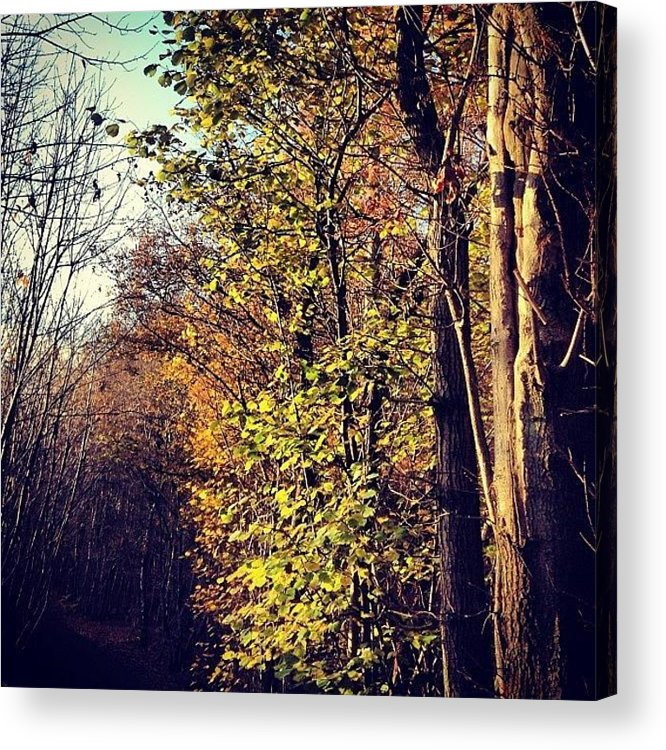 Woods Acrylic Print featuring the photograph Hurst Woods by Nic Squirrell