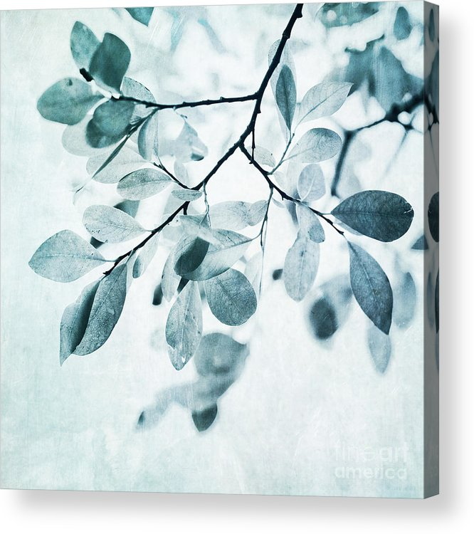 Foliage Acrylic Print featuring the photograph Leaves In Dusty Blue by Priska Wettstein