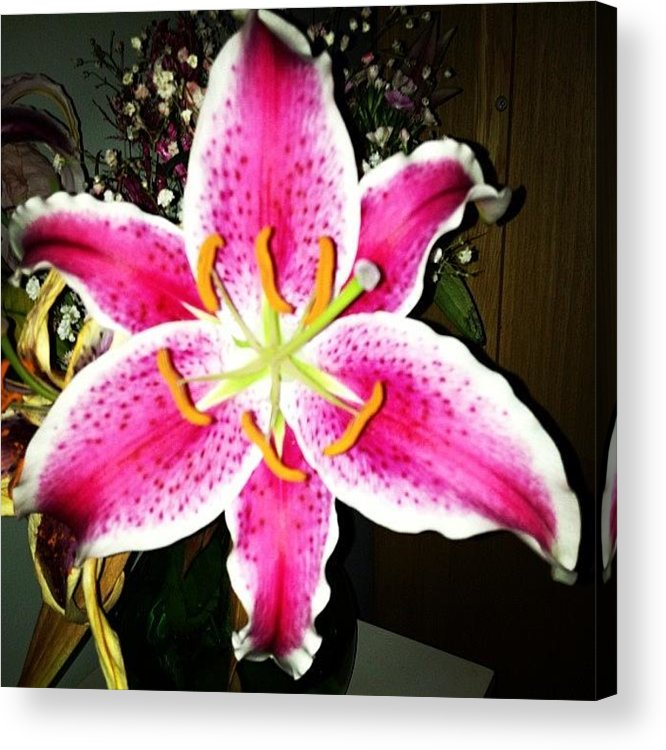 Pink Acrylic Print featuring the photograph #lily #closeup #pretty #flower by Amber Campanaro