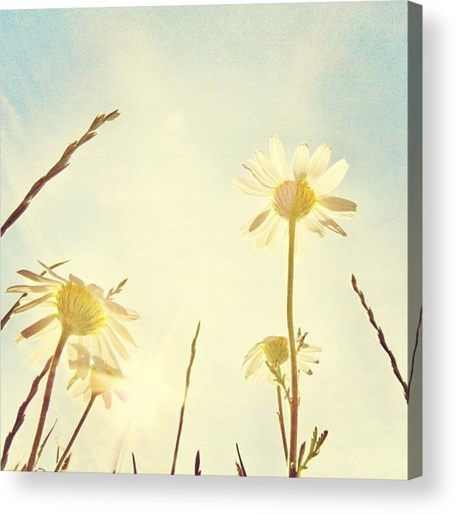 Summer Acrylic Print featuring the photograph #mgmarts #daisy #all_shots #dreamy by Marianna Mills
