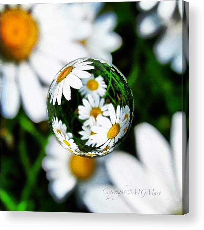 Summer Acrylic Print featuring the photograph #mgmarts #daisy #flower #weed #summer by Marianna Mills