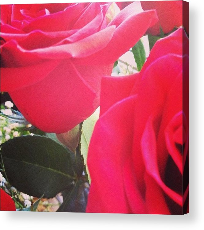 Beautiful Acrylic Print featuring the photograph #red #rose #roses #flower #nature #new by Amber Campanaro