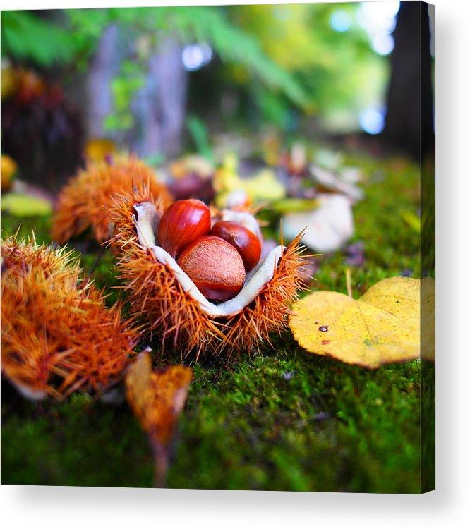 Karuizawa Acrylic Print featuring the photograph Taste Of Autumn by Marco Ferrarin