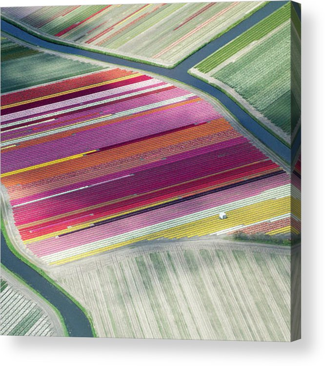 Curve Acrylic Print featuring the photograph Tulip Fields, Aerial View, South by Frans Sellies