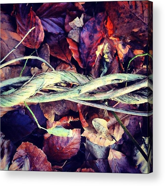 Twisted Vines Acrylic Print featuring the photograph Twisted Vines by Nic Squirrell