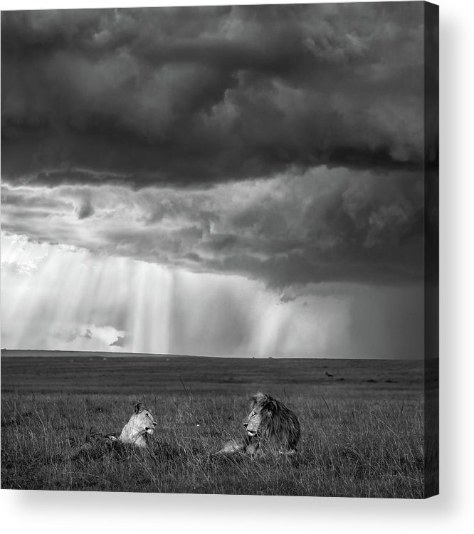 Africa Acrylic Print featuring the photograph Valentine by John Fan