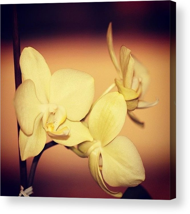 Flower Acrylic Print featuring the photograph White Orchid by Luisa Azzolini