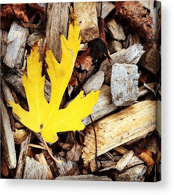 Leaf Acrylic Print featuring the photograph Yellow Leaf by Christy Beckwith