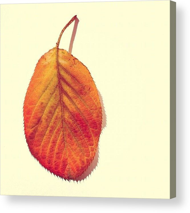 Autumn Acrylic Print featuring the photograph Autumn by Nic Squirrell