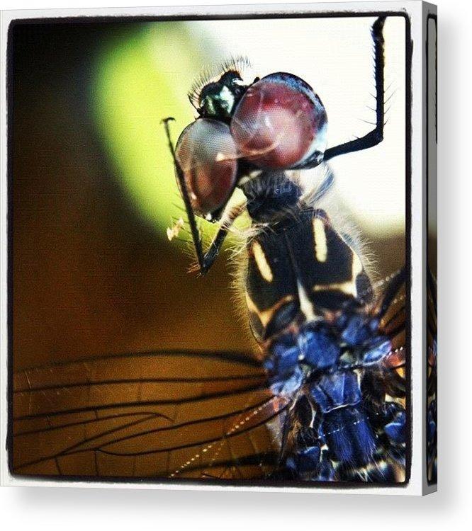 Rcspics Acrylic Print featuring the photograph Dragonfly In Web by Dave Edens