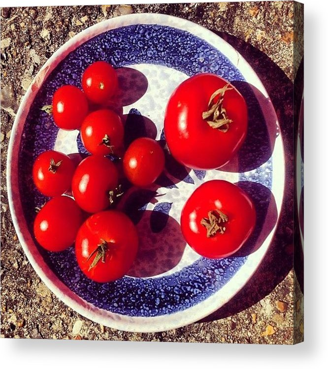 Tomato Acrylic Print featuring the photograph The Entire Crop by Nic Squirrell