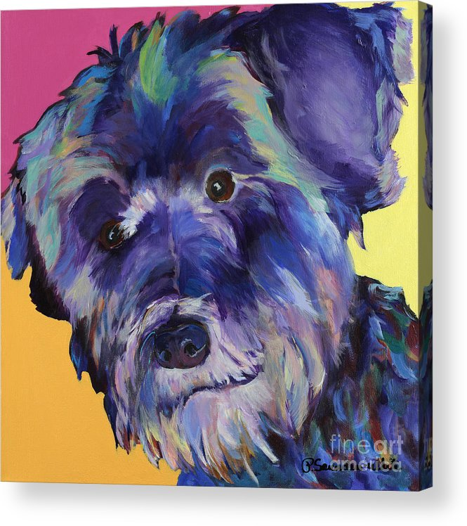 Schnauzer Acrylic Painting Acrylic Print featuring the painting Beau by Pat Saunders-White