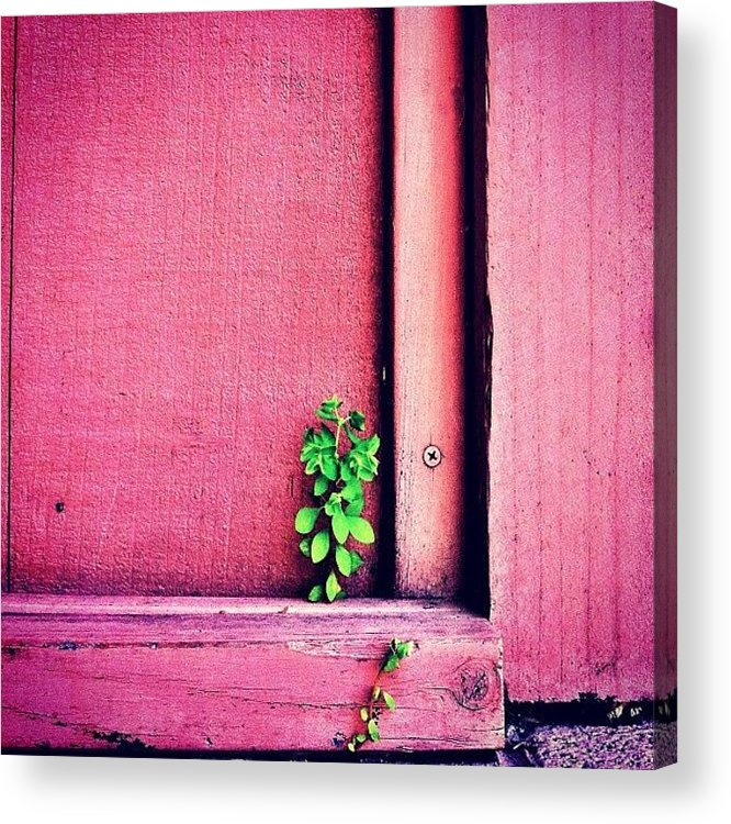 Pink Acrylic Print featuring the photograph Determination by Julie Gebhardt
