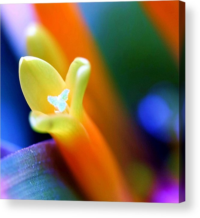Flower Acrylic Print featuring the photograph Feelings by Mitch Cat