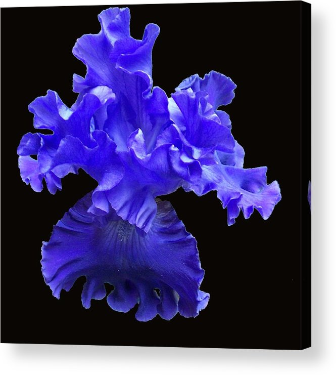 Flower Acrylic Print featuring the photograph Floating by Ellen B Pate