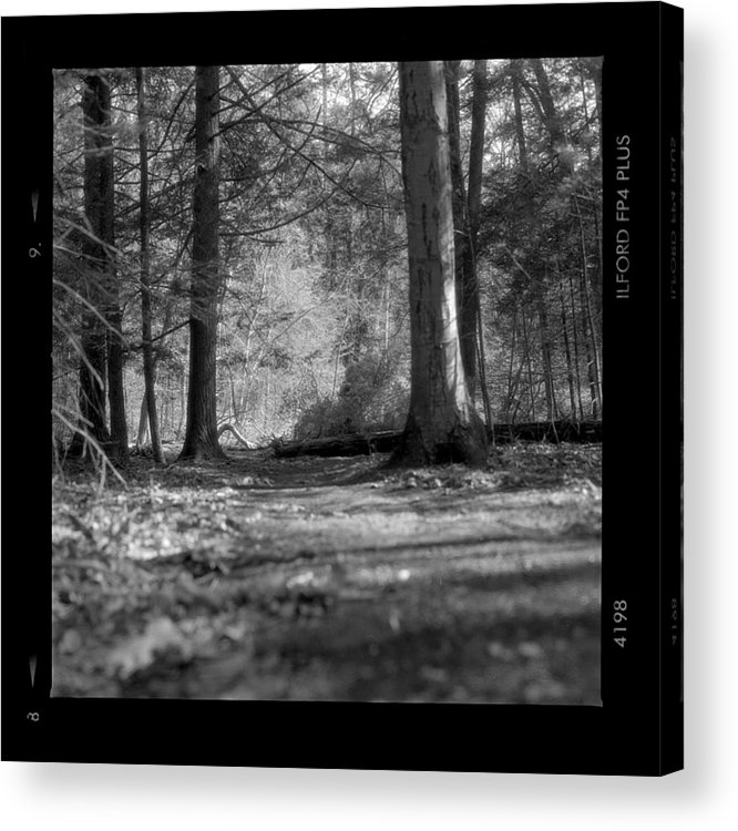 Trees Acrylic Print featuring the photograph Ground Floor by Jean Macaluso