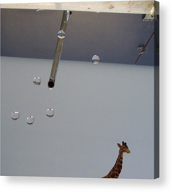 Giraffe Acrylic Print featuring the photograph In the Sink by Michelle Miron-Rebbe