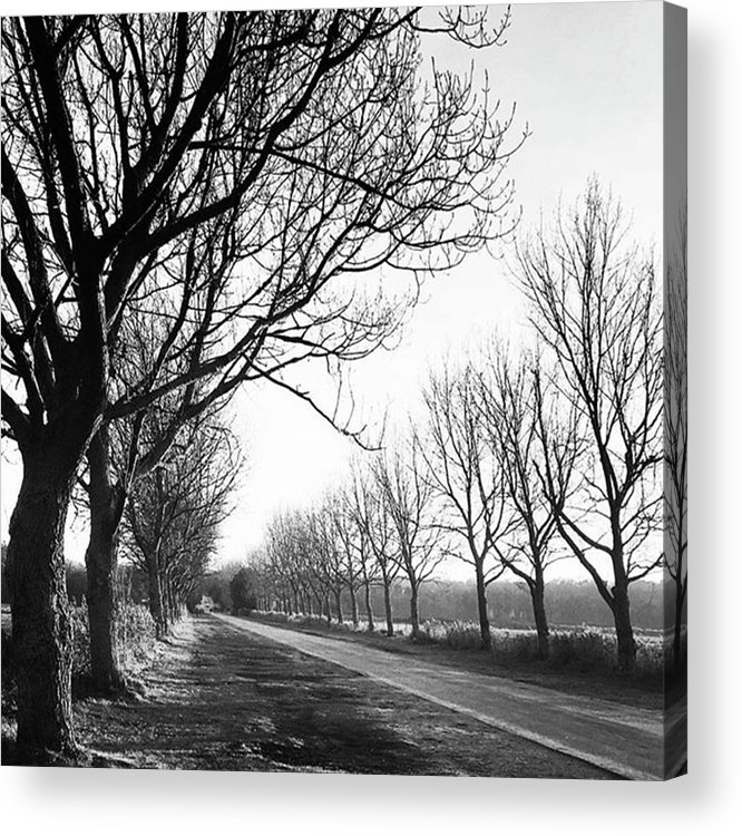 Natureonly Acrylic Print featuring the photograph Lady Anne's Drive, Holkham by John Edwards