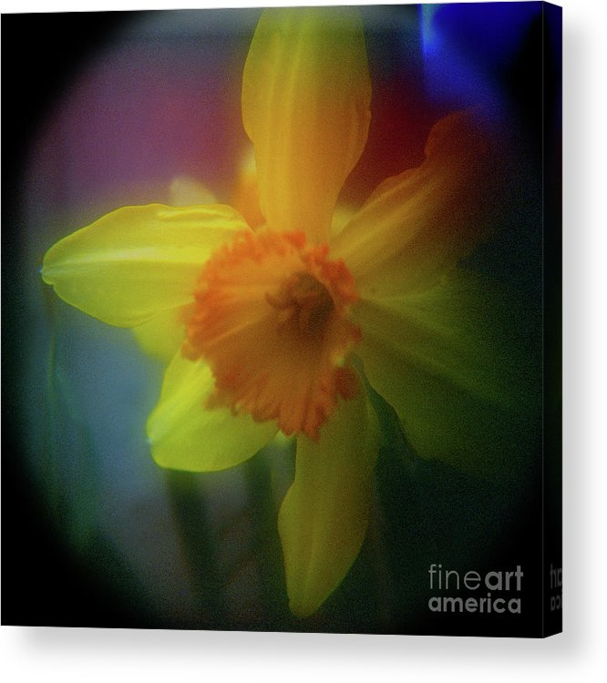 Floral Acrylic Print featuring the photograph Lady Spring 1 by Paul Anderson