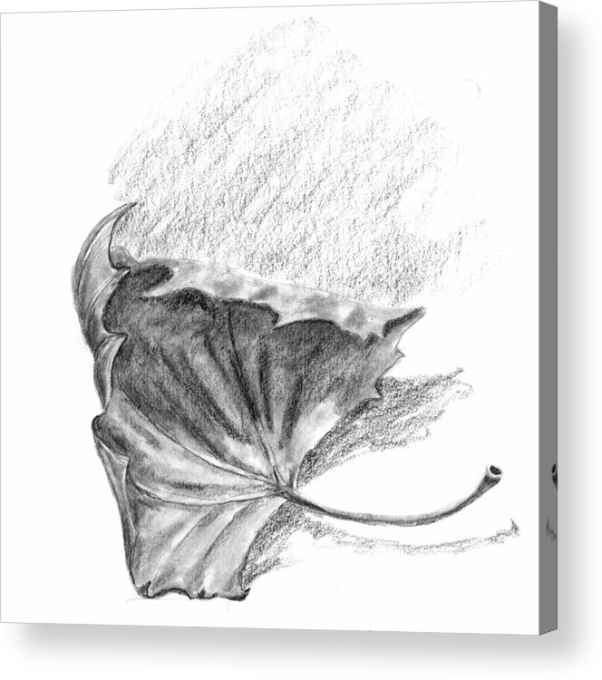 Leaf Acrylic Print featuring the drawing Leaf by Kevin Callahan