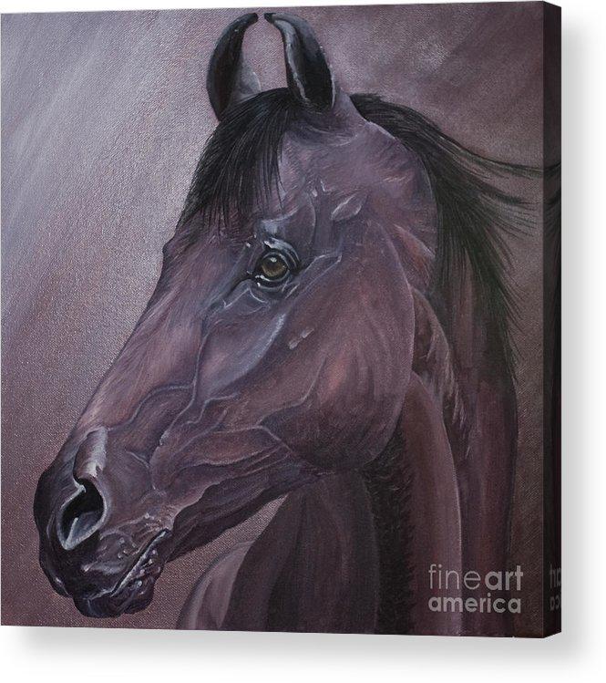 Horse Marwari Equine Purple Acrylic Print featuring the painting Marwari purple by Pauline Sharp