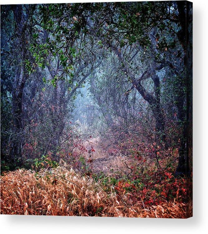 Nature Acrylic Print featuring the photograph Nature's Chaos, Arroyo Grande, California by Zayne Diamond Photographic