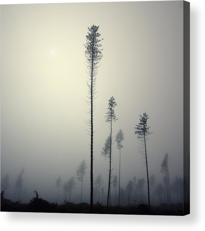 Mist Acrylic Print featuring the photograph Out of the Gray Ashes by Michal Karcz