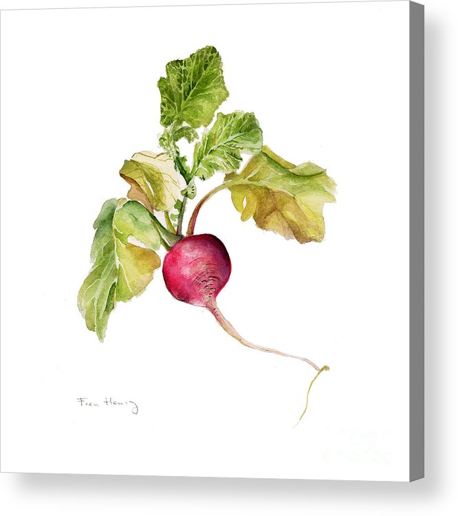 Square Acrylic Print featuring the painting Radish by Fran Henig