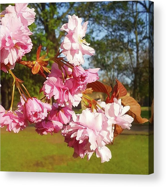 Spring Acrylic Print featuring the photograph This Sun Has Really Brought Out The by Dante Harker