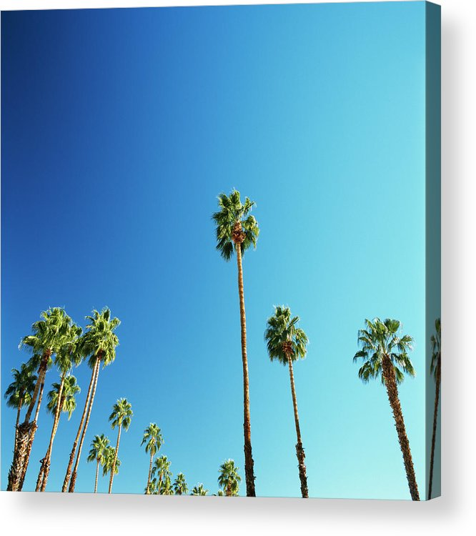 Clear Sky Acrylic Print featuring the photograph Palm Trees Against Blue Sky by Micha Pawlitzki