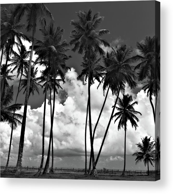 Acrylic Print featuring the photograph Coconut Trees At Mayaro by Trinidad Dreamscape