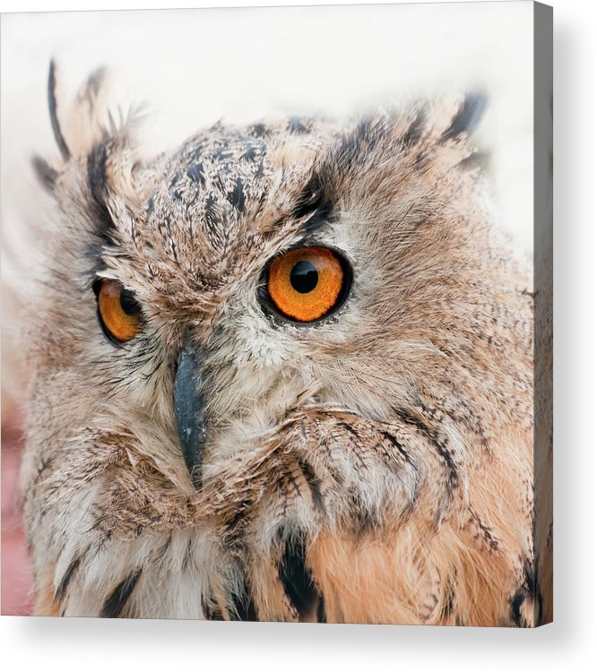 Alertness Acrylic Print featuring the photograph Eagle Owl by Tony Emmett