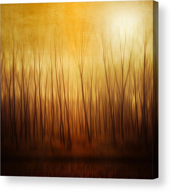 Dawn Acrylic Print featuring the photograph Forest by Philippe Sainte-laudy Photography